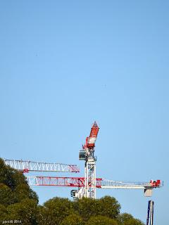 trio of cranes