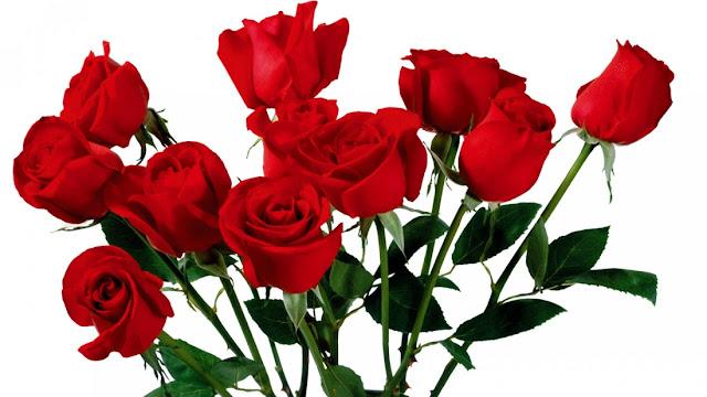 Nằm mơ thấy hoa hồng - soicauxsmb.com