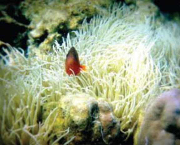 Bawah Laut Pulau Pahawang