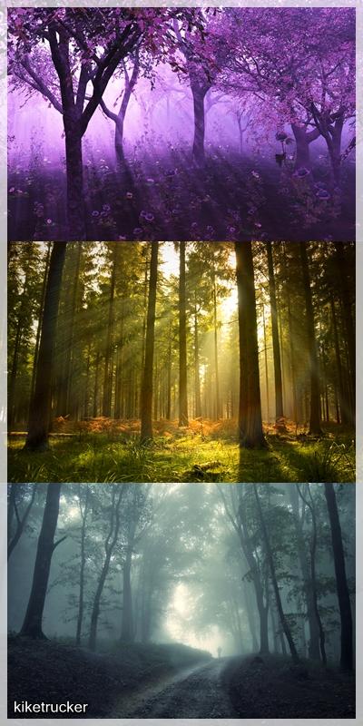 Fondos bosques místicos HD HQ