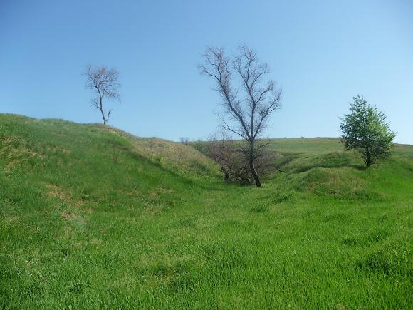 Дружковские окаменевшие деревья