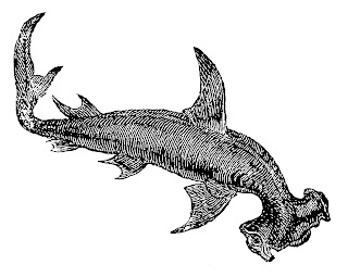 shark fish illustration antique image clip art digital