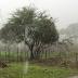 No Vale do Piancó 8 municípios estão em perigo potencial de chuva forte