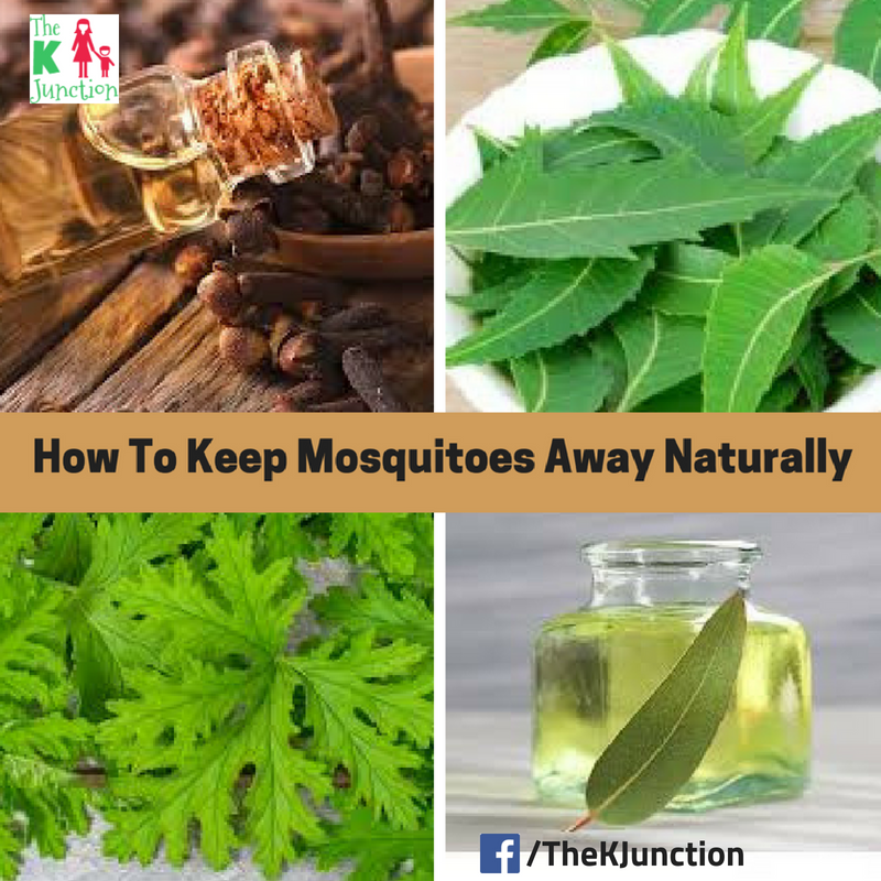 How To Keep Mosquitoes Away Naturally Tips Tricks The K Junction