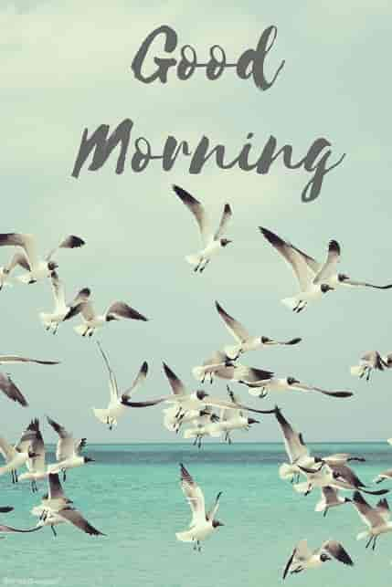 flying birds beautiful morning picture