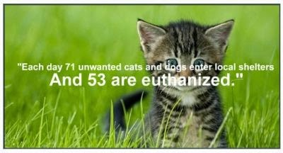 each day countless cats and kittens enter shelters