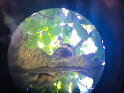 sloth through a telescopic lens
