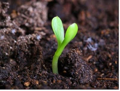 Tanah sebagai sumber energi - pustakapengetahuan.com