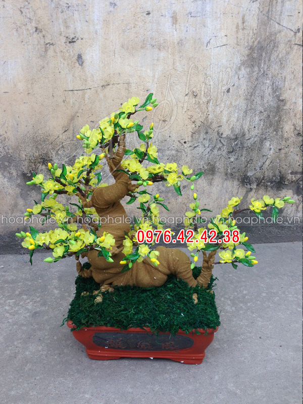 Goc bonsai cay hoa mai tai Chua Vua