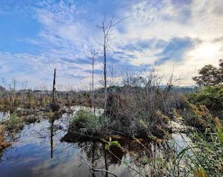 Ekologi dan Interaksi Makhluk Hidup