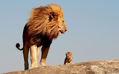 Lion Free HD Wallpaper Downloads, Lion HD Desktop Wallpaper and Background