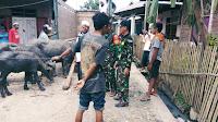 Amankan Kerbau Hasil Curian, Tiga Babinsa Dapat Apresiasi dari Dandim Bima