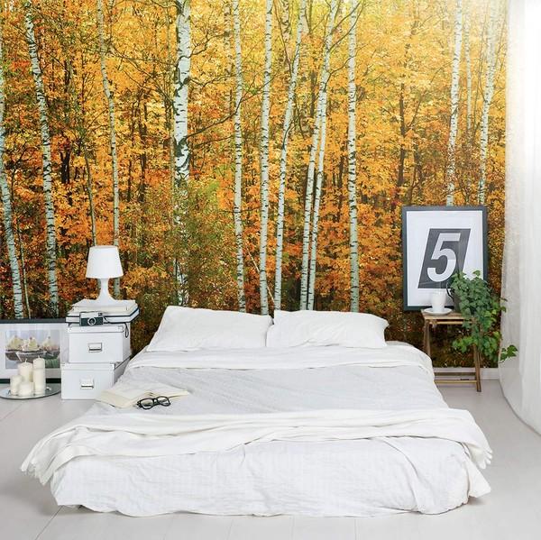 Koivu Tapetti Koivu Taustakuva autumn birch runkojen metsä tapetti puunrungot