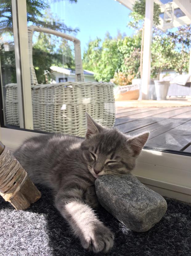grå kattunge Gandalf