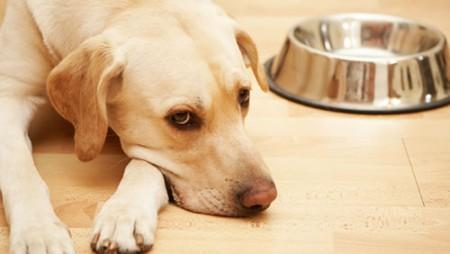 Bệnh viêm dạ dày – ruột ở chó