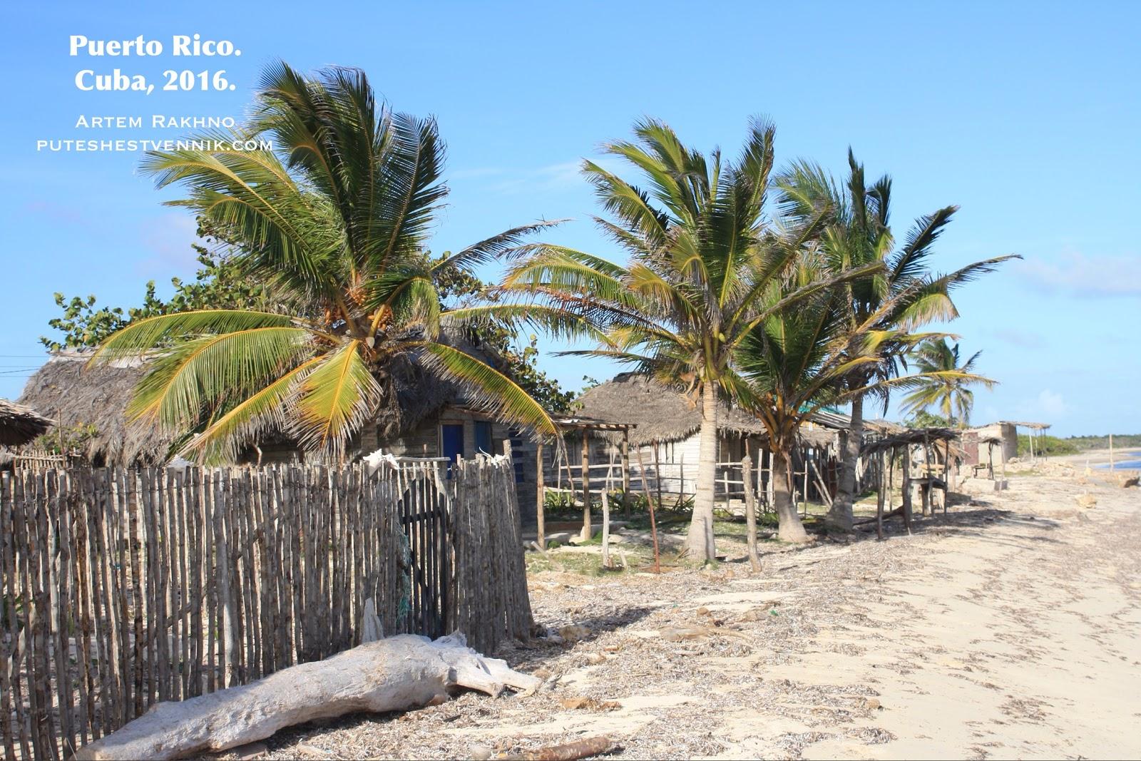 Пальмы в кубинской деревне
