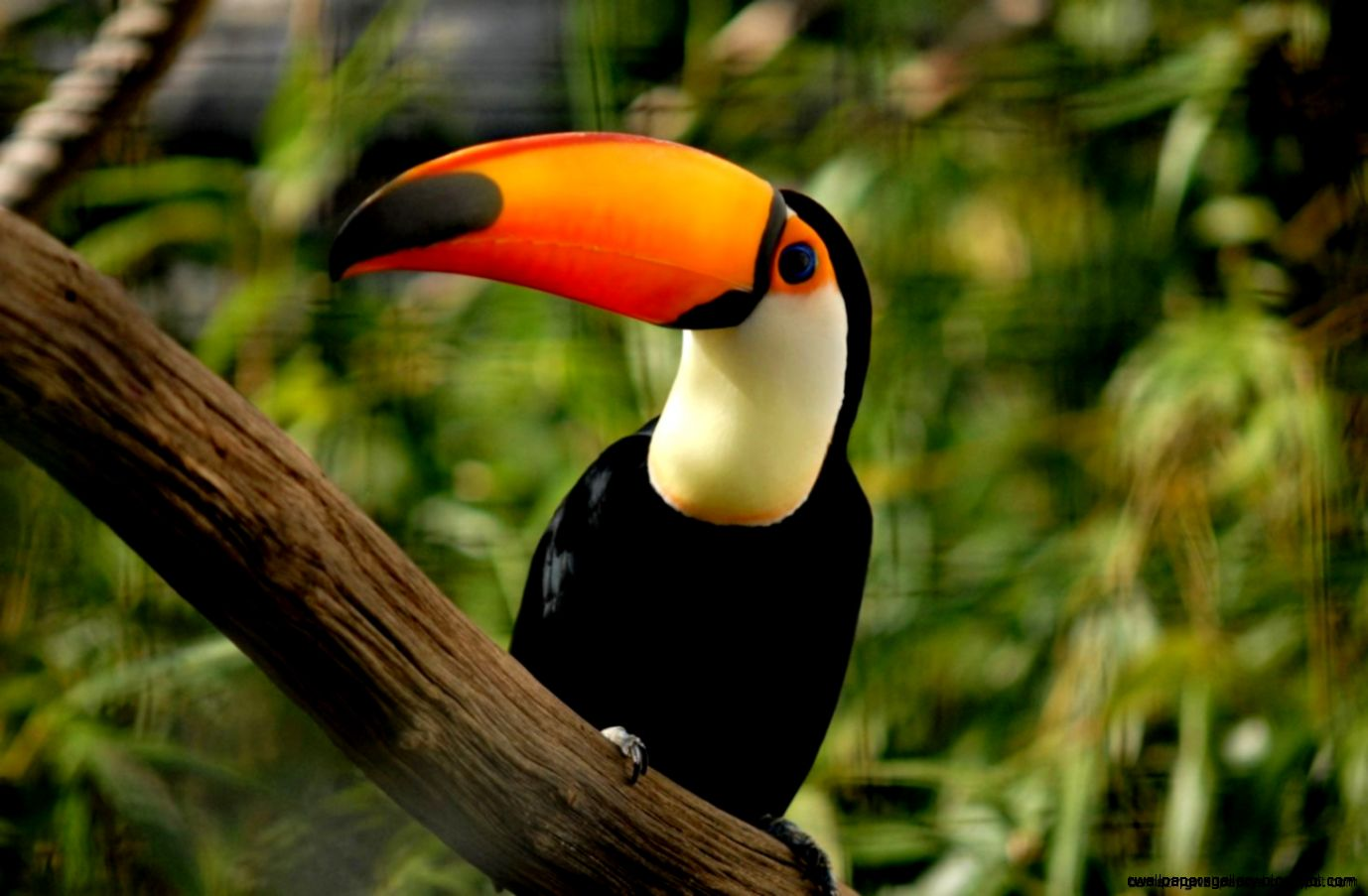 The Tropical Rainforest Animals Wallpapers Gallery