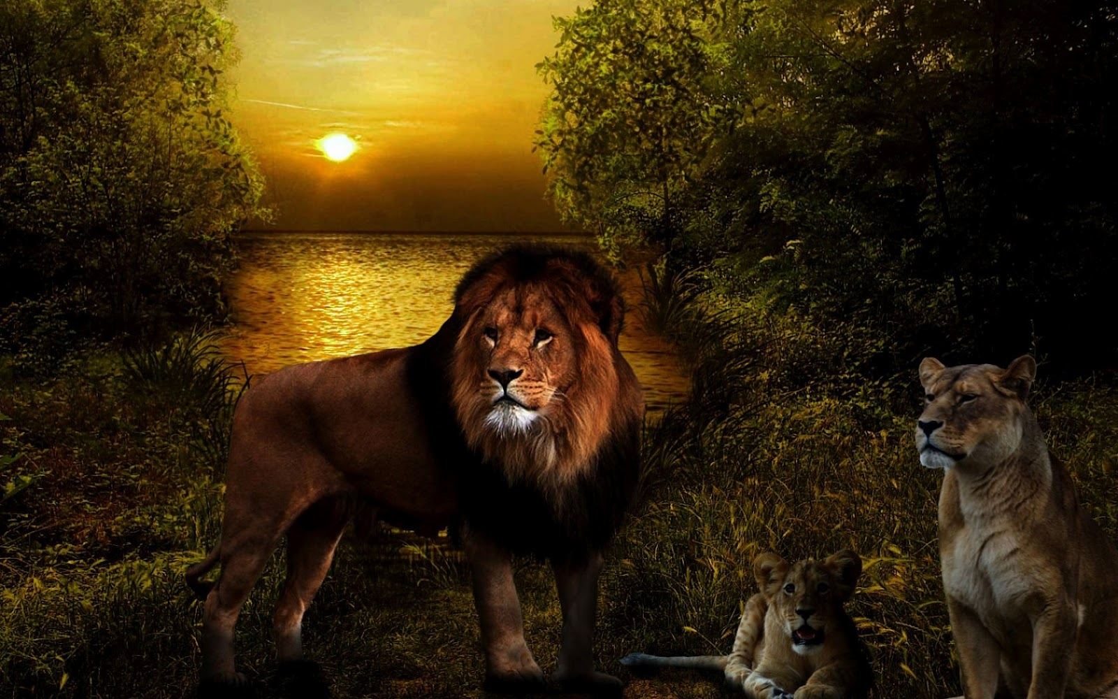 Lion family wallpaper - photo#52