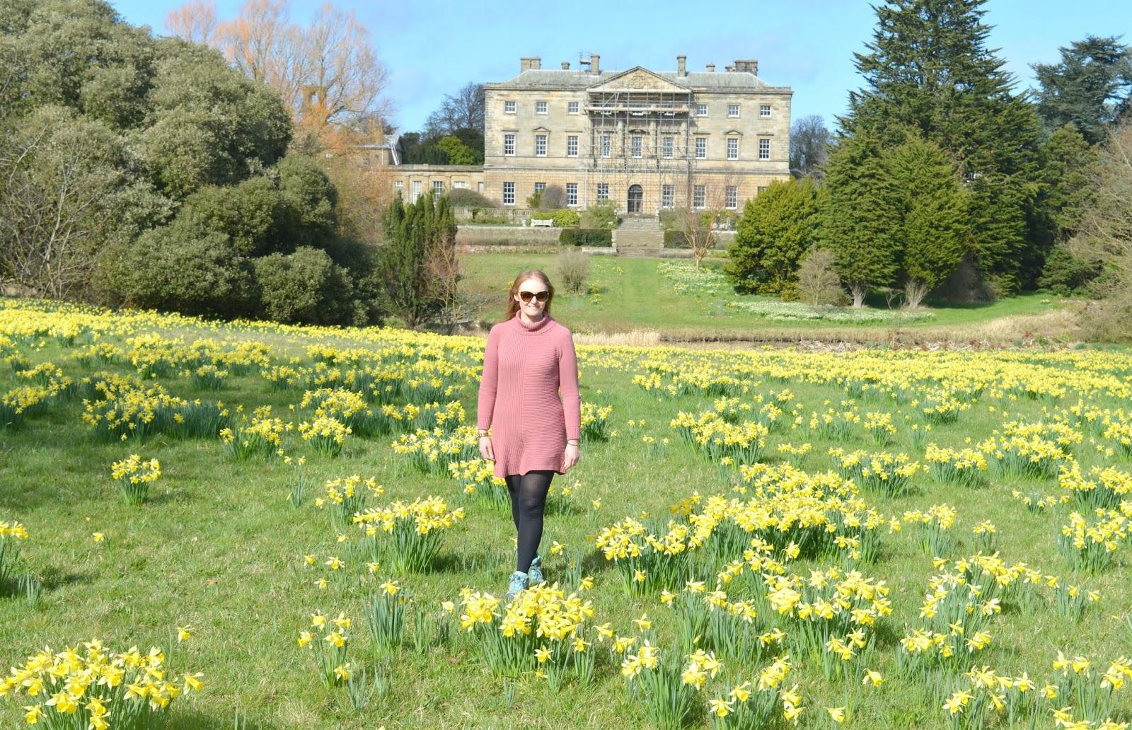 Howick Hall, Northumberland - Daffodils