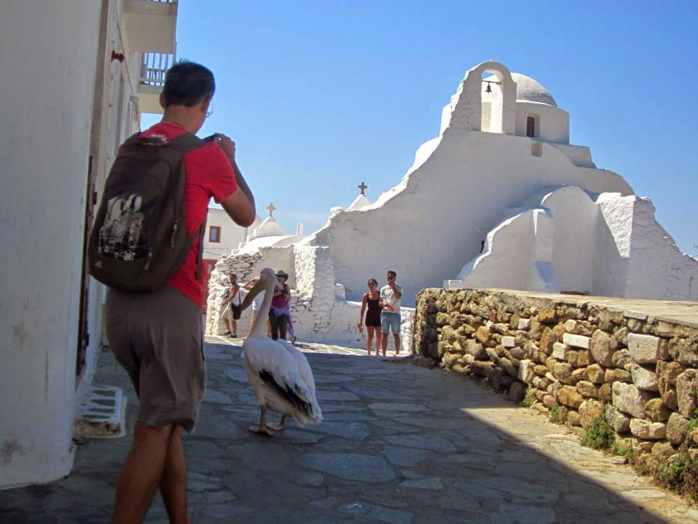Pelican of Mykonos