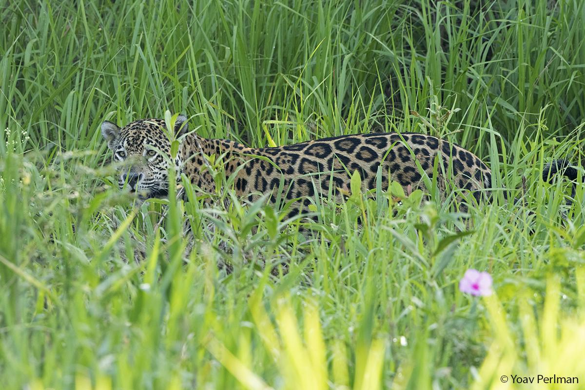 Brazil Pantanal day #2