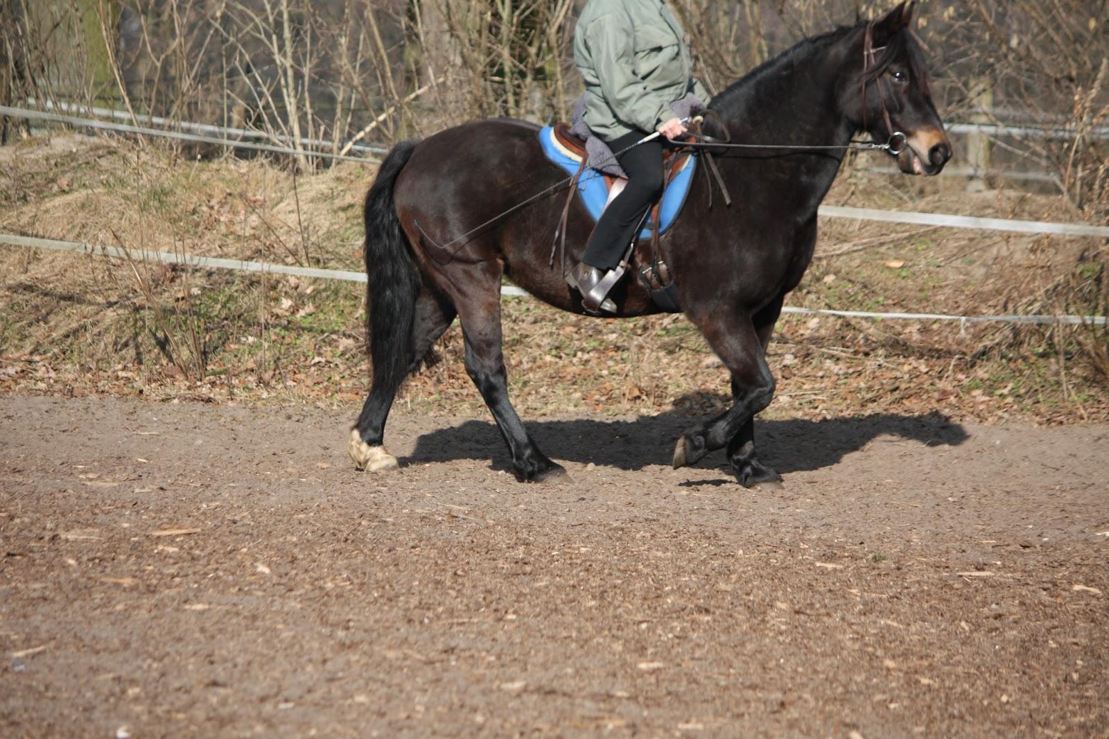 pferd zügel halten