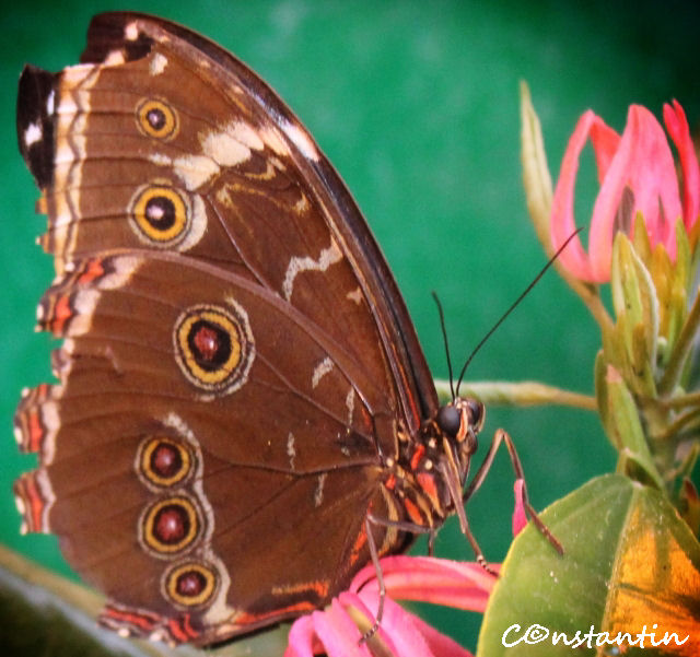 Schmetterlinghaus / Butterfly House - Casa fluturilor Viena - blog FOTO-IDEEA