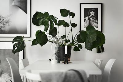 bytová květina