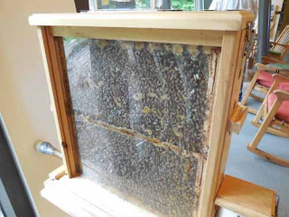 photo of bee hive inside Eastman Nature Center