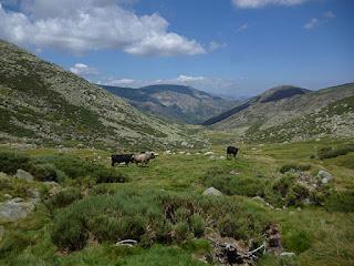 Arroyo de las Serradillas