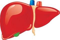 organ-hati-dan-fungsi