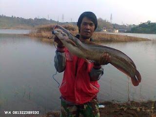Essen Ikan Lele Di Waduk Dari Master Essen