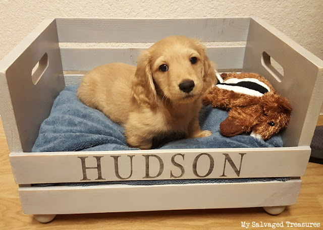 make a custom dog bed with stencils and a wooden crate