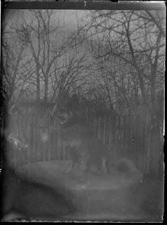 Foto: Hund auf einem Tisch - um 1900