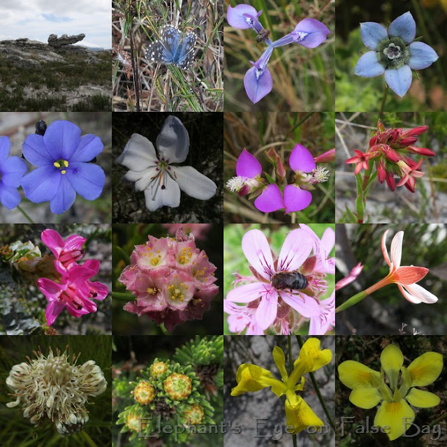 Redhill October flowers
