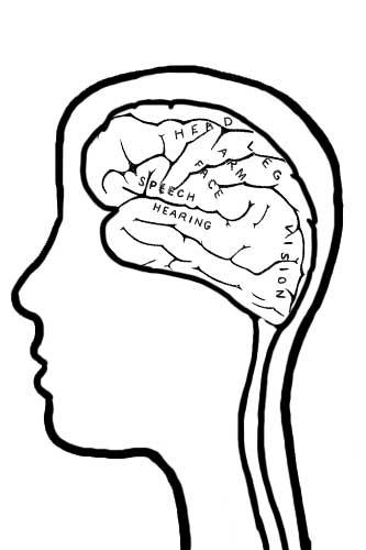 Brain Jack Image: Brain Coloring Pages