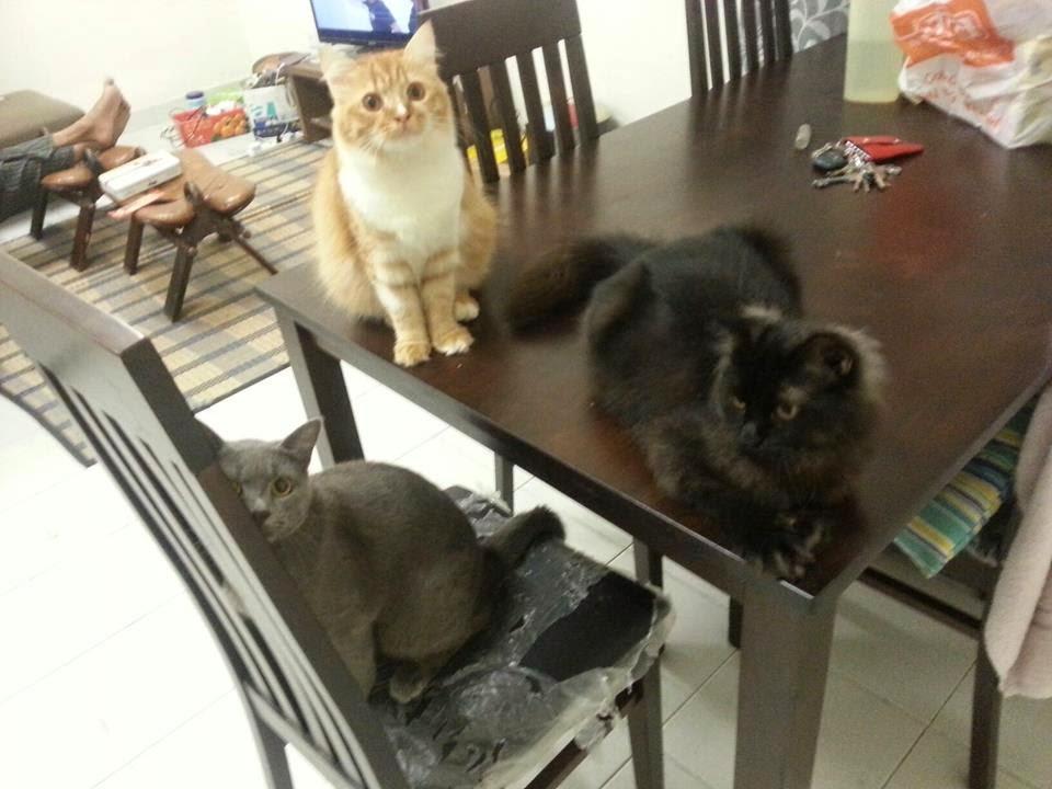 My True Life In Da Fab Lane Riview Pasal Makanan Kucing
