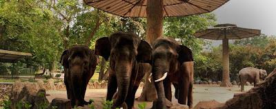 Inilah Liburan Murah Di Jakarta - Kebun Binatang Ragunan