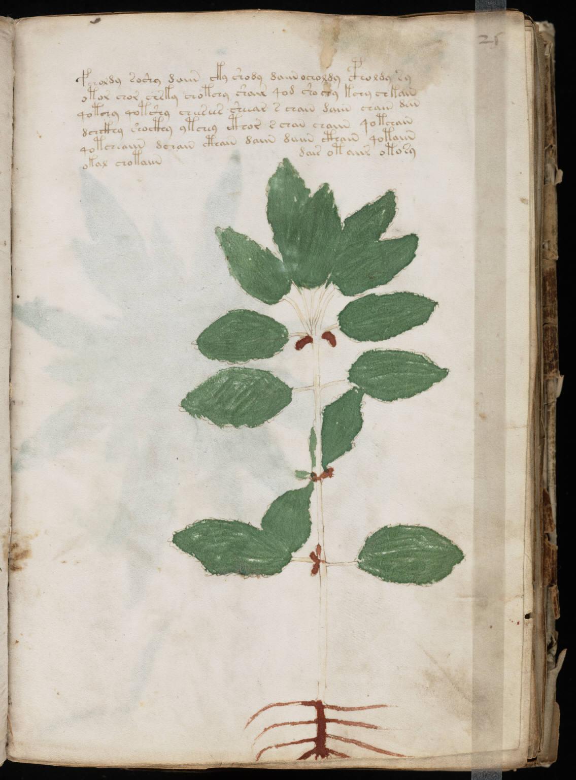 manuscrito049