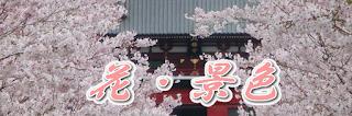 鶴岡八幡宮の花・景色
