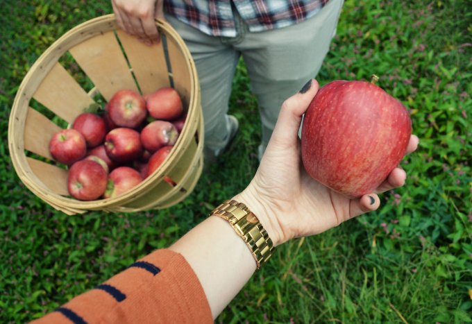 Apple Picking | Organized Mess