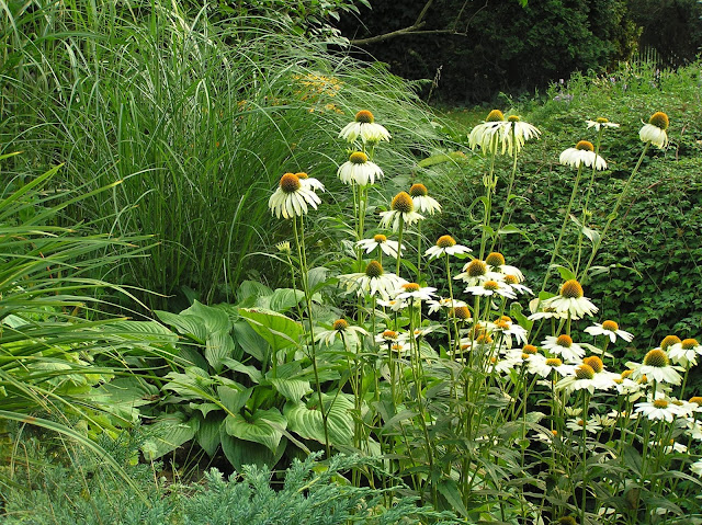 kompozycja biało-zielona w ogrodzie