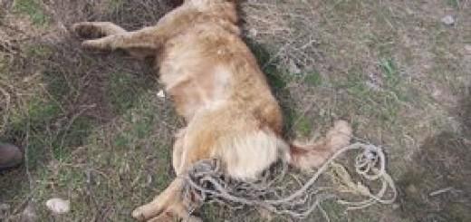17 year old boy rapes dog