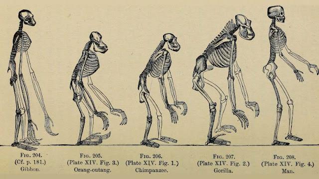 História do surgimento da Antropologia