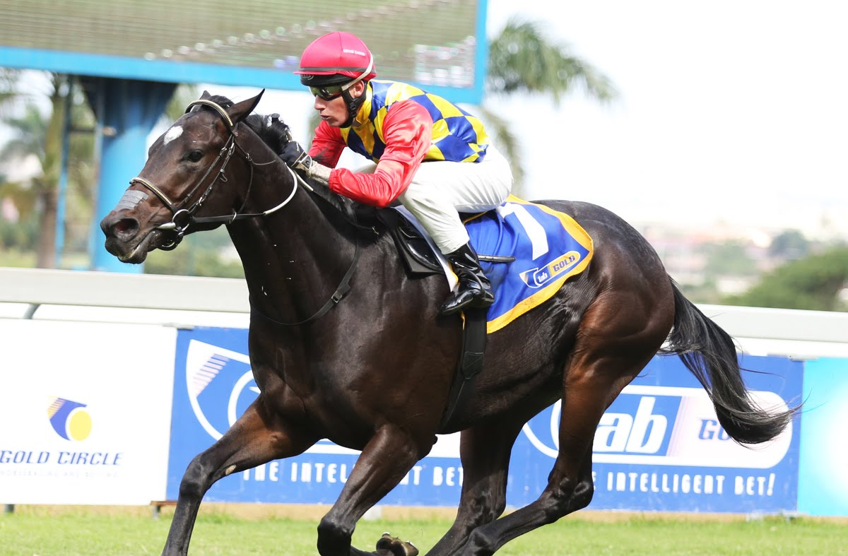 Pack Leader - Vodacom Durban July 2018 contender - horse racing
