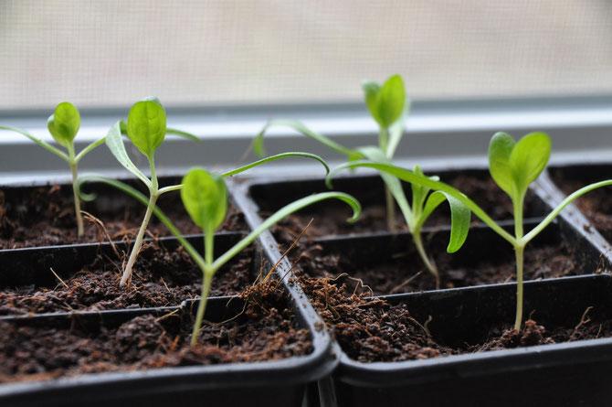 Errores a evitar con los semilleros