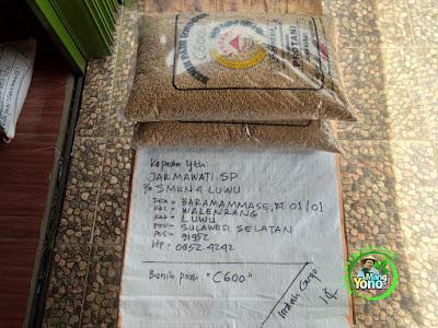 Benih Padi Pesanan    JARMAWATI SP. Luwu, Sulsel    Benih Sebelum di Packing.