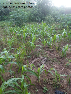 continuous system of  farming
