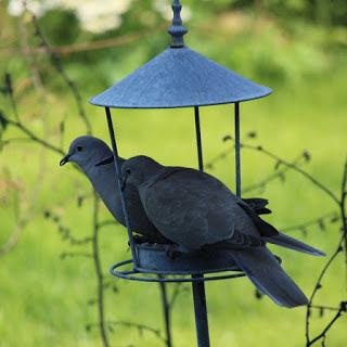 photo oiseau belgique