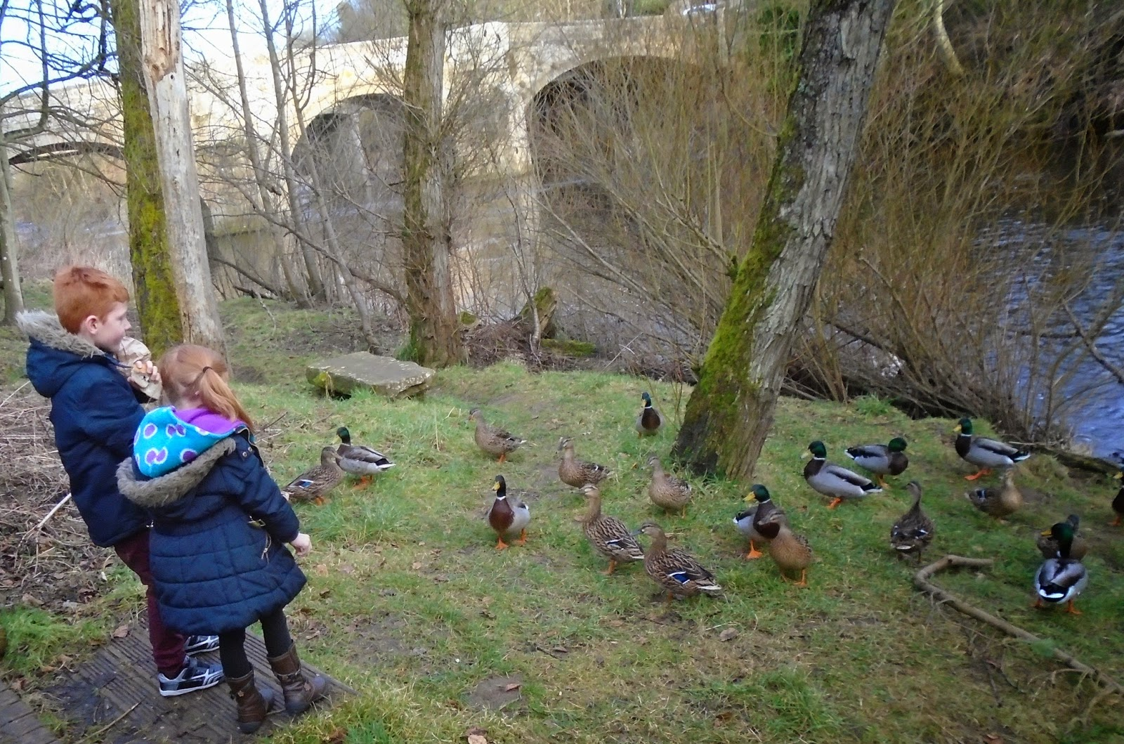 north east family fun feeding ducks at felton with free bread from the running fox